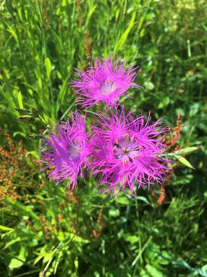 花びらがきれい! 個体の変種もあるのかな?