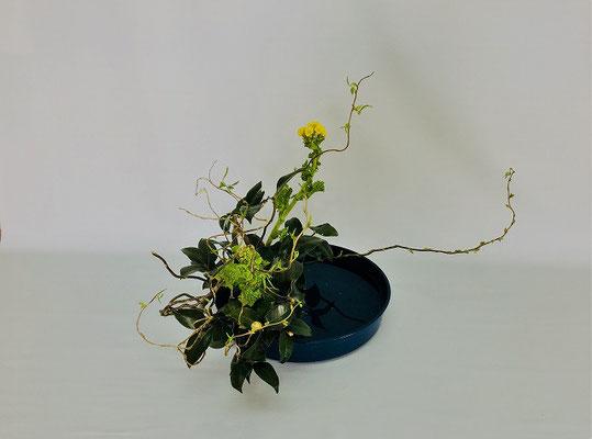 <雲竜柳 菜の花 椿> Tamikoさんの作品です。