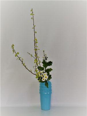 <金葉こでまり 白小菊> Kumikoさんの作品です。