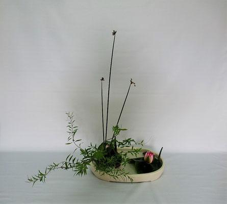 2020.6.30 <雪柳(ユキヤナギ) 太藺 睡蓮(スイレン)> 砥部焼の白っぽい器によく合います。Kumikoさんの作品です。