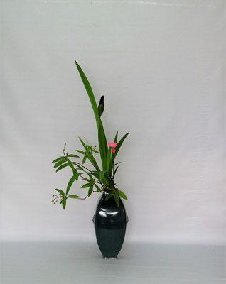 2020.6.16 <燕子花(カキツバタ) 未央柳(ミオウヤナギ) 撫子(ナデシコ)> 皹寧窯礎瓶に小品花のお稽古。Tamikoさんの作品です。