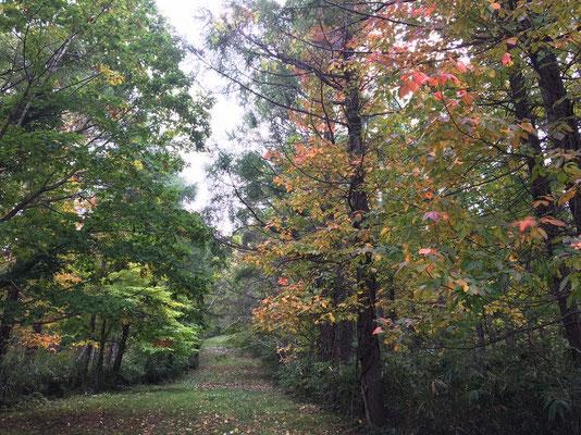 曇天ながら静かな紅葉の森を歩くのは、最高の気分でした。