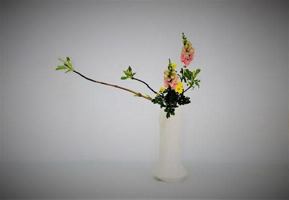 3/20<芽出し紫陽花 スナップドラゴン 小菊> Tamikoさんの作品です。