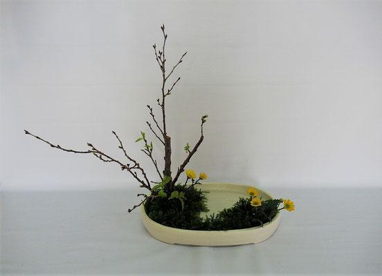 2020.2.25 <桜 黄小菊 日蔭> Tamikoさんの作品です。写景盛花・様式本位 桜の一木挿しのお稽古をしました。水温む季節感を味わいました。
