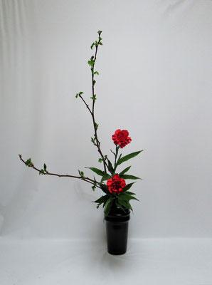 2020.4.7 <芽出し木苺 カーネーション ドラセナサンデリアーナ> Kumikoさんの作品です。