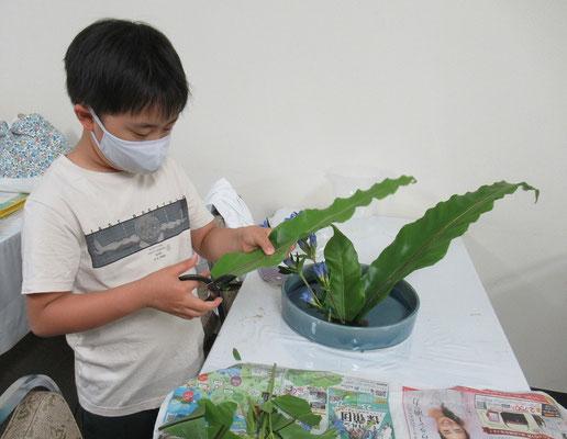 タニワタリの葉の長さを確認しながら上手に切り揃えています。