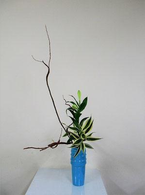 2020.1.15 <石化柳(セッカヤナギ) 透かし百合 ドラセナサンデリアーナ>  Atsukoさんの作品です。