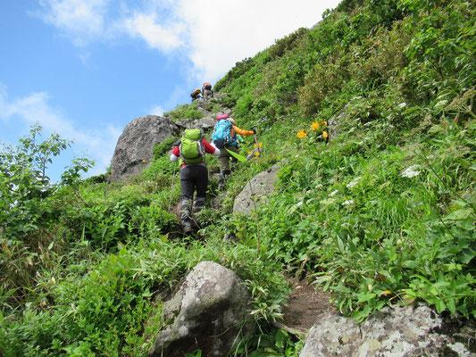 2020.7.9 チセヌプリの山頂へ続く山道。エゾカンゾウのオレンジ色がアクセント。