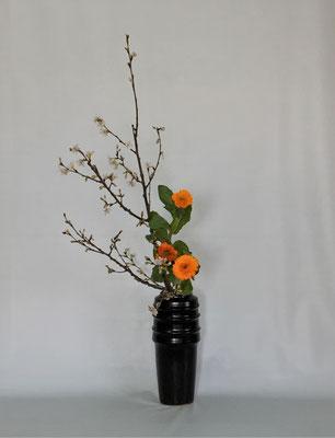 2019.3.5 <啓翁桜(ケイオウザクラ) 金盞花(キンセンカ)> Kumikoさんの作品です。橙色の金盞花は葉が豊富についていましたので二種でいけました。