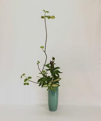4/24 <虫狩 芍薬 ゴッドセフィアナ> Kumikoさんの作品です。