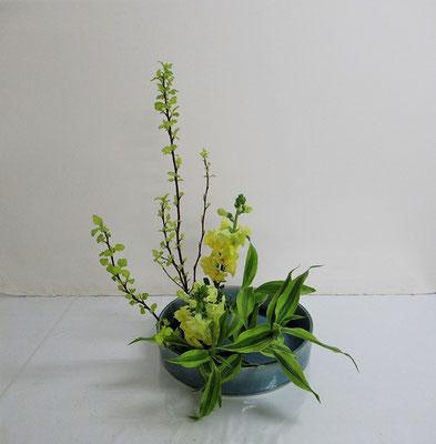 2020.2.26 <金葉コデマリ スナップドラゴン ドラセナサンデリアーナ> Katsurakoさんの作品です。客枝をドラセナにいけ替えてみました。
