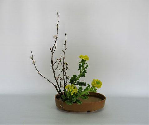 2021.2.9 <桜 菜の花> Chiakiさんの作品です。2月研究会の課題をお稽古しました。