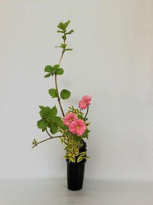 <芽出し紫陽花 ガーベラ 斑入りイボタ> Tamikoさんの作品です。姿の良い紫陽花を立てて瓶花に。やわらかな色合いが明るさを。