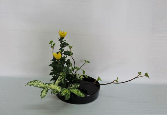 2019.4.30 <虫狩 中菊 ゴッドセフィアナ> Chiakiさんの作品です。盛花「観水型」。初めてお稽古。花留は七宝を使用して。