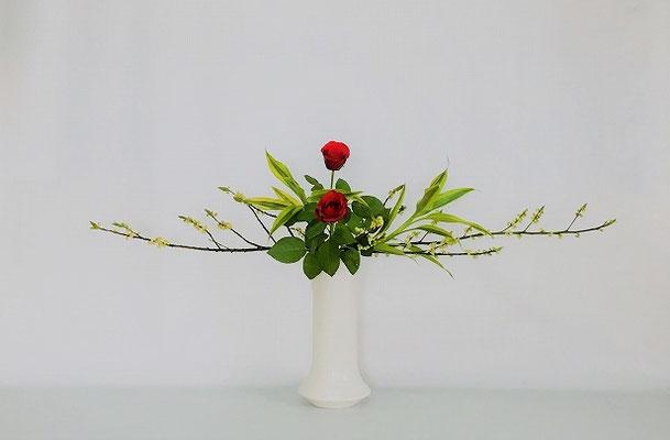 <青文字 バラ ドラセナ・サンデリアーナ> Kumikoさんの作品です。
