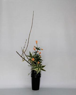 <連翹(レンギョウ) マイクロ透かし百合 ドラセナ・サンデリアーナ> Kumikoさんの作品です。