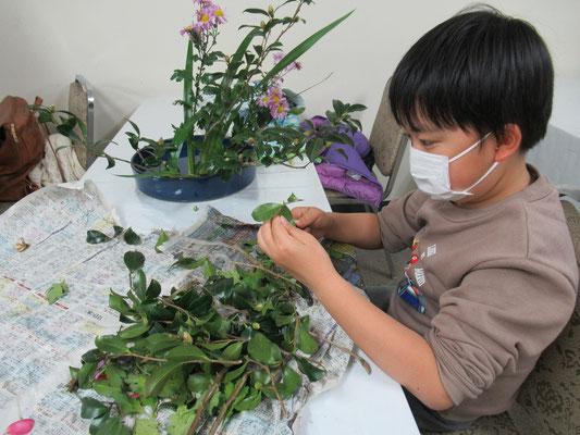 サザンカの旺盛な葉を整理するのはとても難しいです。真剣な表情で取り組むIttsuちゃん。