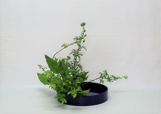 2021.6.15 <雪柳 麝香葵(ジャコウアオイ) ギシギシ> Kumikoさんの作品です。野の花を加えて写景盛花のお稽古です。