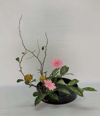 2018.10.9 <実木瓜 ガーベラ ゴッドセフィアナ> Chiakiさんの作品です。直立型を丸水盤にいけました。