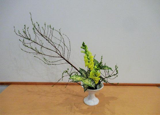 <雪柳(ユキヤナギ) スナップドラゴン ゴッドセフィアナ> Katsurakoさんの作品です。初めての「かたむけるかたち」。