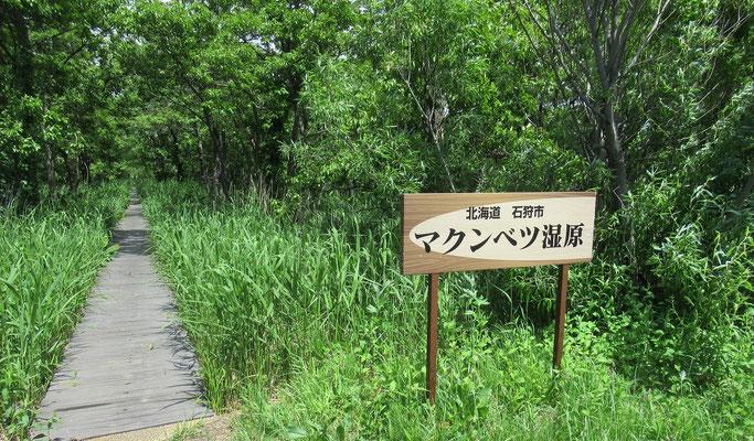 2020.6.7 4/13に訪れた時から約2ヶ月後の湿原入口。植物が旺盛に茂っていた。