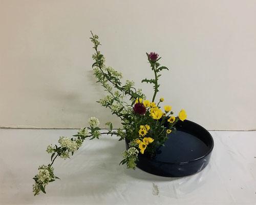 2020.4.1 <コデマリ 薊(アザミ) 小菊> Katsurakoさんの作品です。