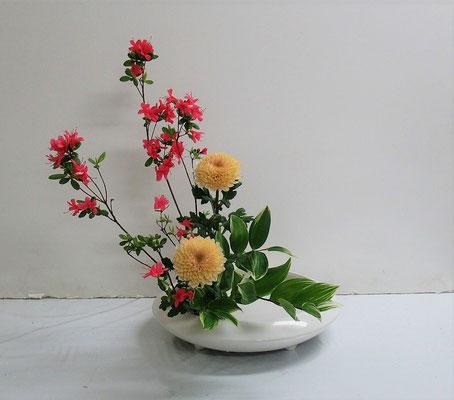 2021.4.28 <皐月(サツキ) 菊 鳴子百合> Katsurakoさんの作品です。素敵な菊です。何と言う品種でしょう!
