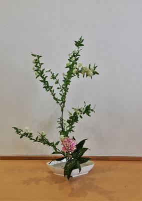 <コデマリ カーネーション ゴッドセフィアナ> 花材が余りましたので二作目をいけました。Natsumiさんの作品です。