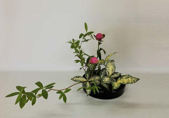 <未央柳 芍薬 ゴッドセフィアナ> Chiakiさんの作品です。 傾斜型2回目。今日は丸水盤で。