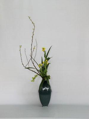 2019.2.19 <金葉コデマリ 菜の花 キキョウラン> Tamikoさんの作品です。キキョウランは著莪のようなシャープな表情が特長です。