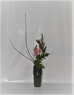 <珊瑚水木 スナップドラゴン クッカバラ> Tamikoさんの作品です。