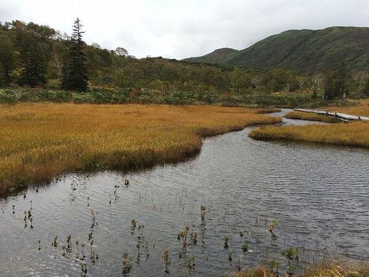 2015.10.1 ニセコの湿原。
