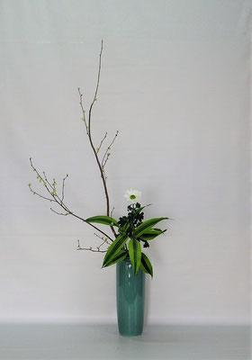 2020.1.28 <姫水木(日向水木) 小菊 ドラセナサンデリアーナ> Kumikoさんの作品です。