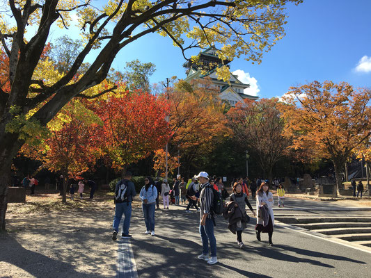 紅葉が見ごろを迎えていました。世界からの観光客がいっぱい。