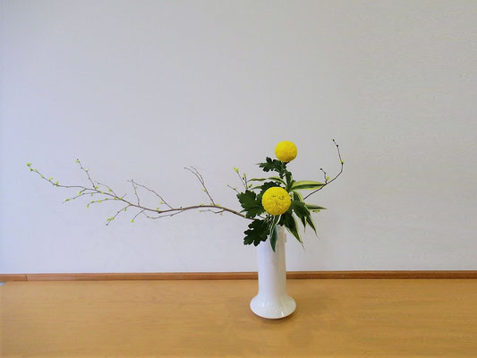 <土佐水木(トサミズキ) オランダ玉菊 ドラセナサンデリアーナ> Natsumiさんの作品です。かたむけるかたちを初めて瓶にいけました。
