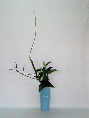2020.1.14 <石化柳 透かし百合 ドラセナ> Tamikoさんの作品です。