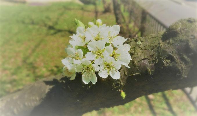 白い花を接写でうつしてみました。