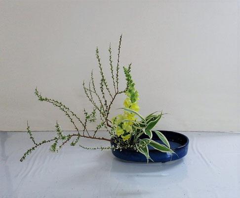 2021.4.7 <雪柳 スナップドラゴン ドラセナサンデリアーナ> Michikoさんの作品です。盛花・傾斜型のお稽古です。雪柳の小枝の整理もよくできました。爽やかです。