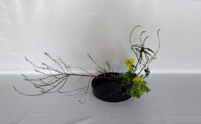 <雪柳 菜の花 ゼンマイ>   by Tamikoさん