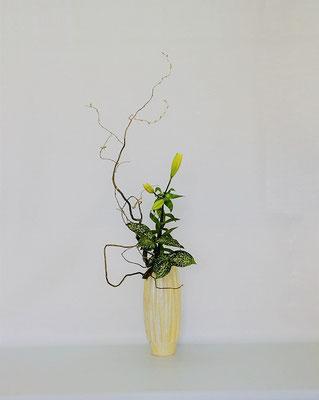 <雲竜柳 透かし百合 ゴッドセフィアナ> Kumikoさんの作品です。