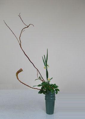 2019.12.11 <石化柳 水仙 山茶花(サザンカ)> Atsukoさんの作品です。水仙の見せ処を考えてお稽古しました。