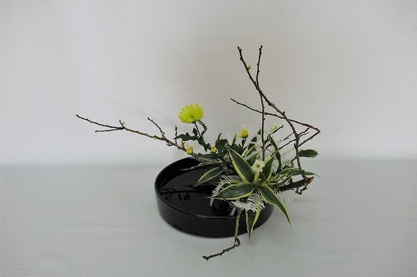 2021.2.2 <梅 小菊 ドラセナサンデリアーナ 晒し山シダ> Chiakiさんの作品です。晒し山シダが手に入りましたので、花材を野の花に見立てて今の季節ならではの雰囲気を表現しようと写景のお稽古をしました。