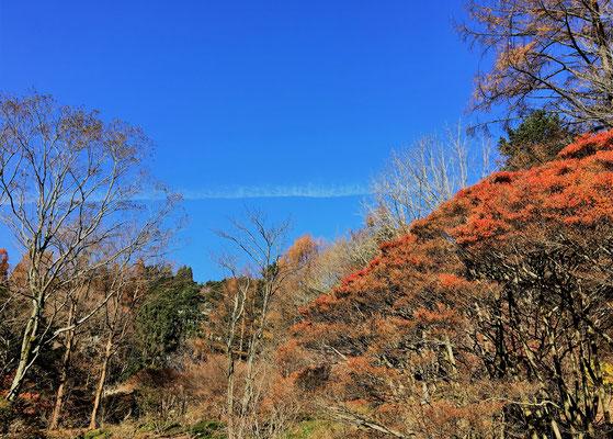 ドウダンツツジの紅葉と青空