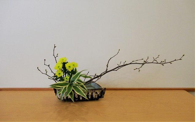 <椎の木(シイノキ) スプレー菊 ドラセナ・サンデリアーナ> Natsumiさんの作品です。枝物の主材にスプレー菊、難しい取合せでしたが、色々な花材に取り組むことも上達の道と頑張りましたね。