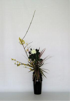 2021.2.9 <連翹 中菊 ドラセナレインボー> ドラセナはとても品種の数が多い植物です。熱帯地方が原産の植物ですが、日本でも色々な種類のドラセナに出合います。Tamikoさんの作品です。