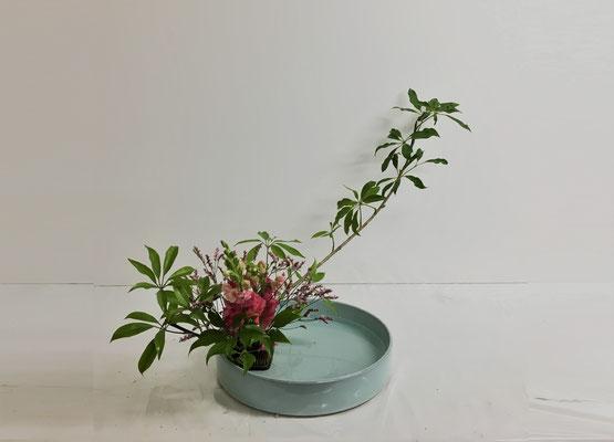 <ホンコンカポック スナップドラゴン スーパーレデイ> Hinakoさんの作品です。「かたむけるかたち」をダイナミックに丸水盤にいけてみました。カボックの葉が艶やかで綺麗です。