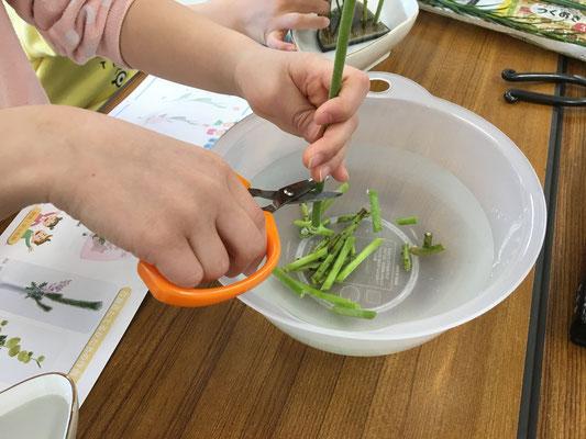 『水切り』は、植物の水揚げの基本です。