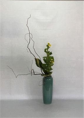<雲竜柳 菜の花 月桃(ゲットウ)> by Kumikoさん