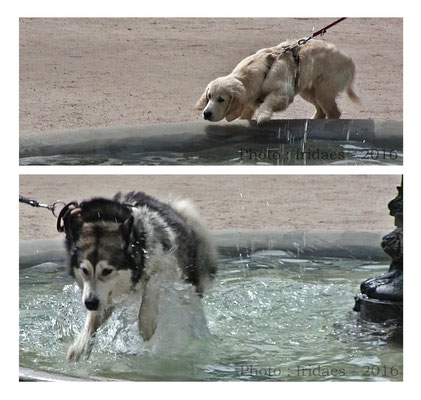 Imaginales 2016 - the fountain on a hot day : all the dogs wanted to take a dip ! / la fontaine un jour de forte chaleur : tous les chiens voulaient y faire trempette !