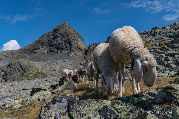 Knapp unterm Gipfel des Valschavieler Maderer fotografiert